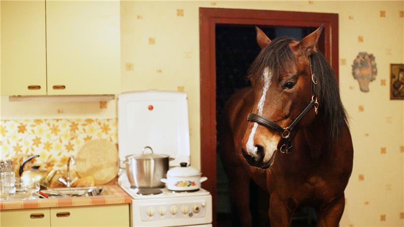Das Pferd auf dem Balkon